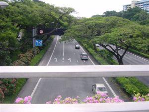 Even highways look like parks & flower beds